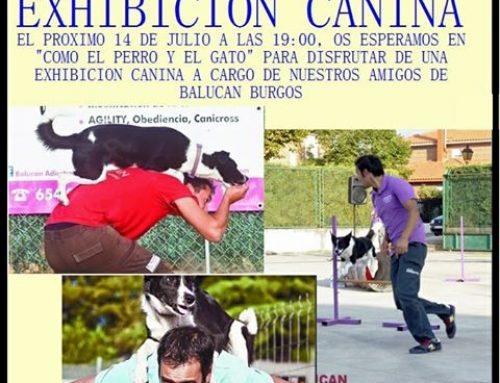 EXHIBICIÓN CANINA!!!!!