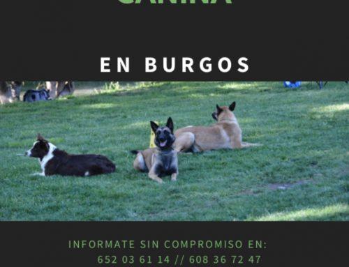 Grupos de Obediencia Canina Básica